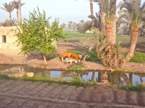 Scene from window of train just outside Cairo, Egypt.