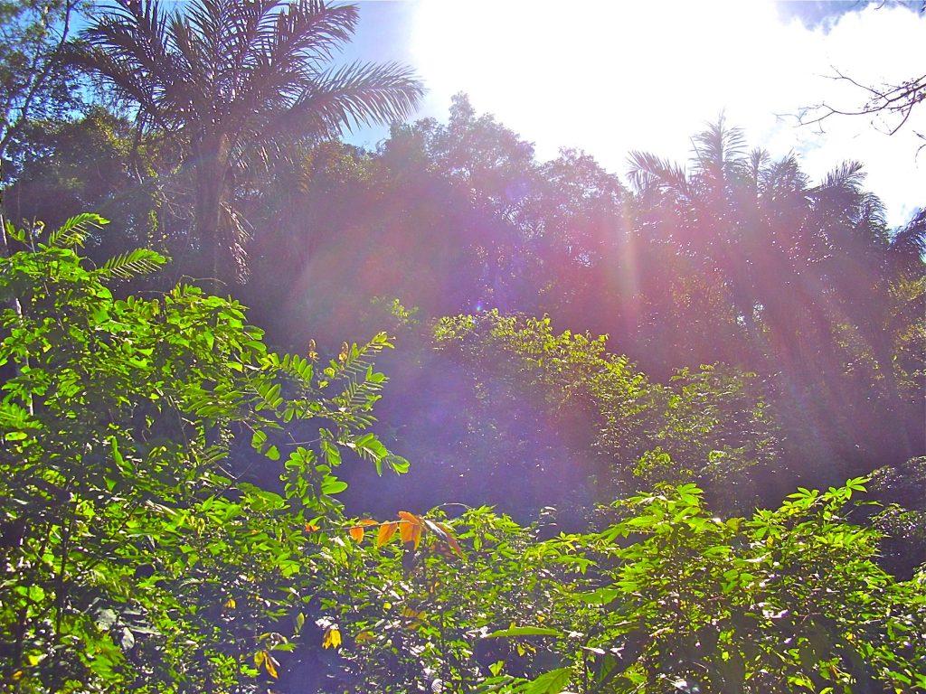 Amazon jungle adventures
