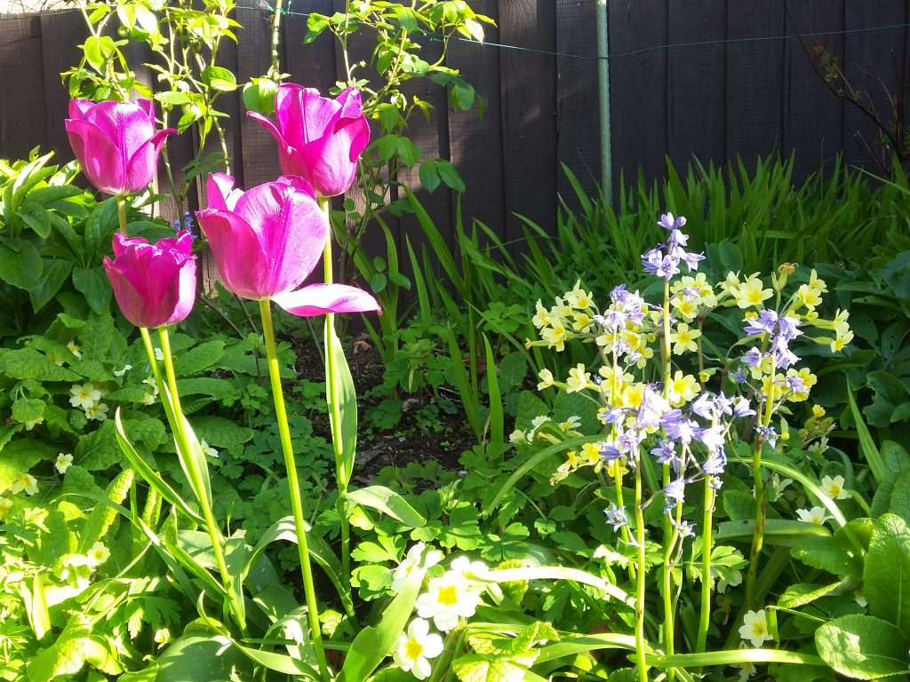 Flowers in the garden on a sunny day - that beautiful feeling of home.