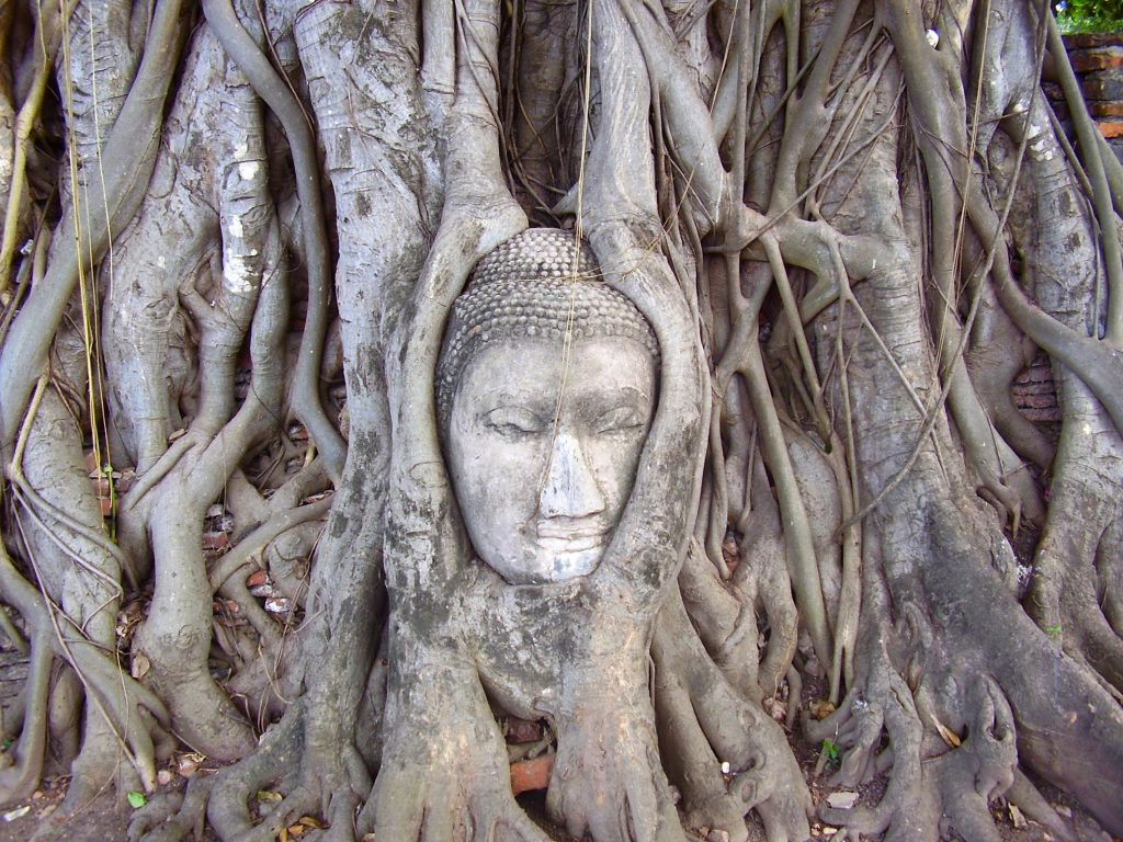 Ayutthaya, Thailand. I dream of a life of endless adventure ♡